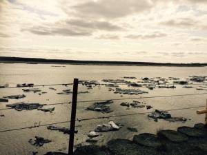 brokern up river